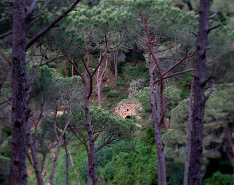 كان عنّا طاحون عنبع الميّ قدّامو ساحات مزروعة فيّ (Beït Chabâb, Mont-Liban, Lebanon)