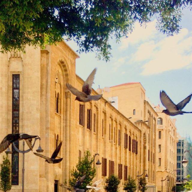 Sans maison ni abri, n'avoir qu'une paire d'ailes et le ciel infini💙💚🐦... (Beirut, Lebanon)