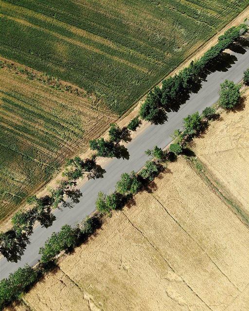 • Green vs Yellow • 💚💛 luna_drone drone mavicair mavic nature ... (`Ammiq, Béqaa, Lebanon)