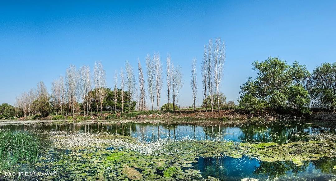 ammiq lac lake bluesky spring flowers inthelake nature ...