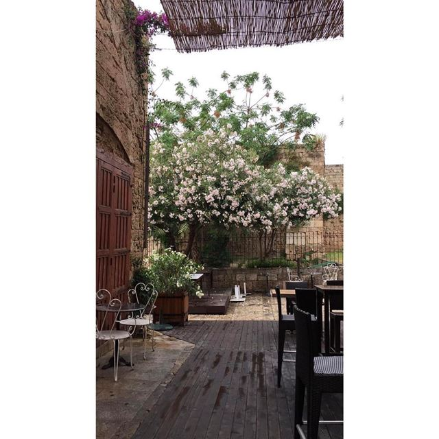 « Les pensées sont lentes, profondes et dorées le matin » morning spring... (Byblos, Lebanon)