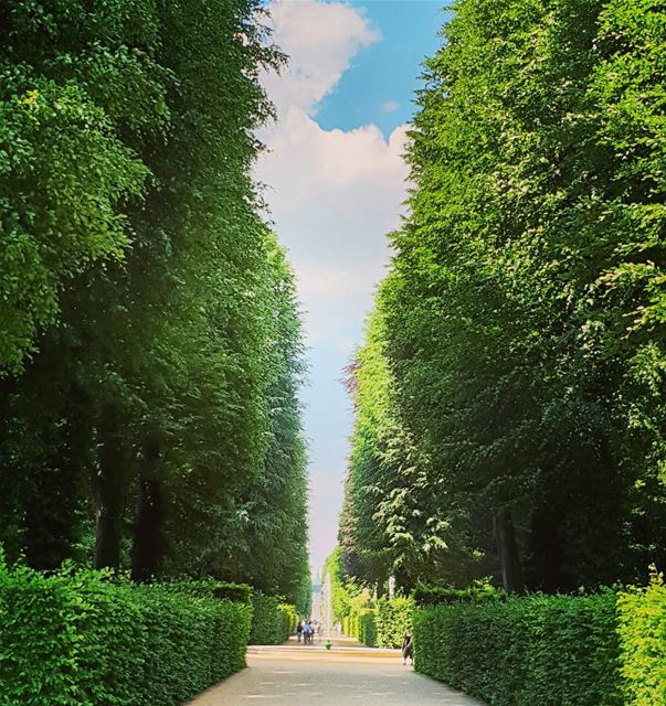 Very attractive perspective is.n't ? gemrmany🇩🇪 greenery garden castle... (Schloss Sanssouci)