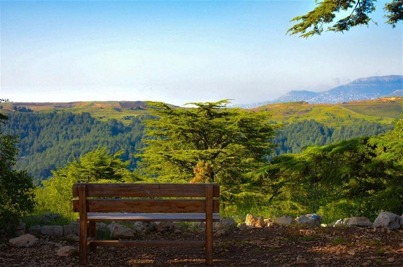 A Royal View..-📍Tannourine Cedars Reserve, Lebanon 🇱🇧- cedars cedar ... (Cedar Reserve Tannourine)