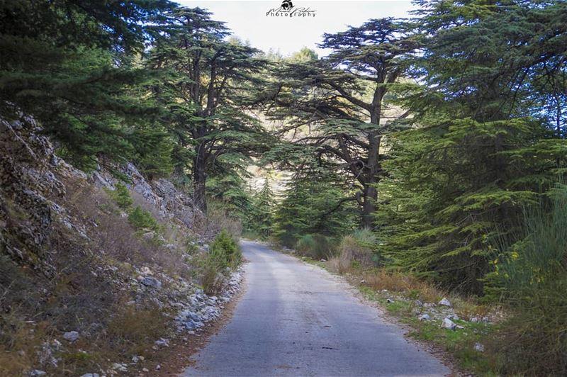Shouf biosphere reserve 😍 • • • chouf shoufreserve lebanon beirut ...