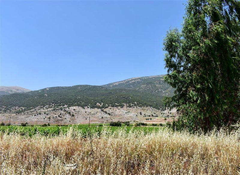 lebanoninapicture ptk_lebanon livelovebeirut insta_lebanon ... (West Bekaa)