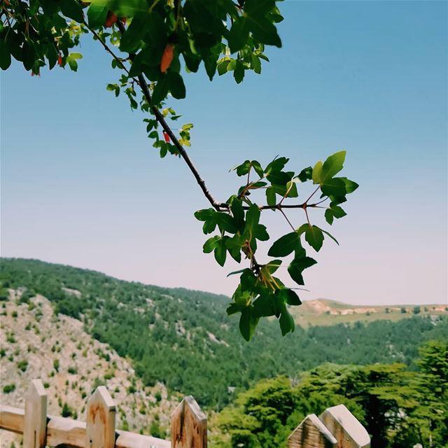 Just love it... lebanoninapicture Lebanon arz forest ... (Arz Tannoûrîne)