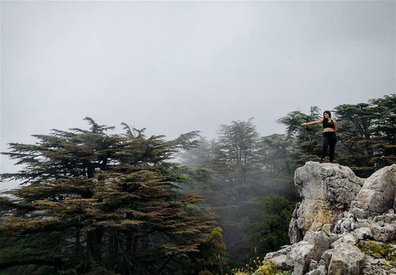 Behold The Foggy Cedars Forest🌫️🌲 Hiking Tannourine Lebanon... (Arz Tannoûrîne)