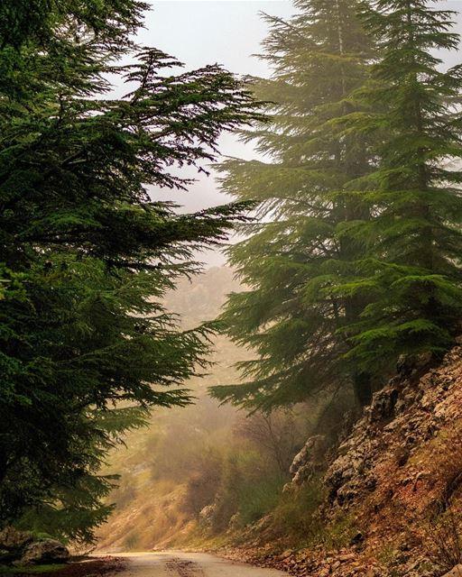 Nature Lebanon shouf landscape beautiful super_lebanon loves_lebanon... (Al Shouf Cedar Nature Reserve)