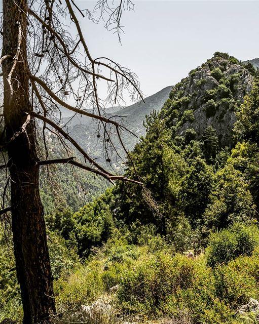 Climb every mountain, cross every stream... (Lebanon)