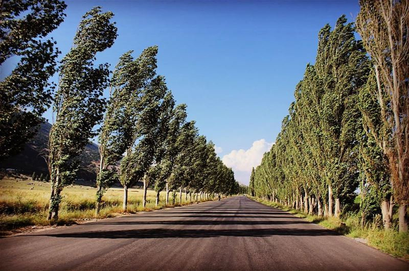 Road of poplar road  tree  trees  shadow  sky  clouds  tagthestory ... (West Bekaa)