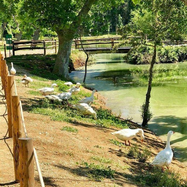 New day New blessing,Wish you a happy Week start 🌳💚-------------------- (Deïr Taanâyel, Béqaa, Lebanon)