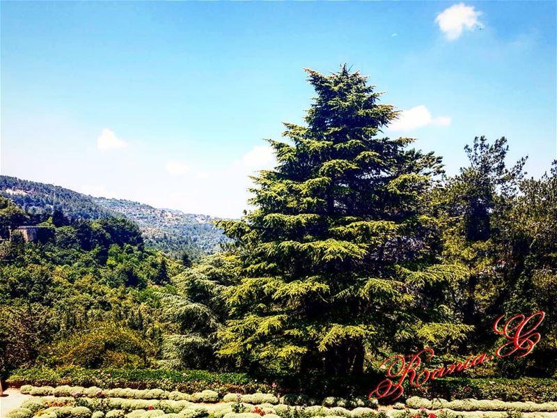 ... (Beit Ed-Deen, Mont-Liban, Lebanon)