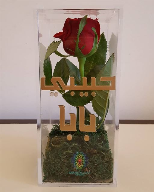 مين حبيب بابا ؟Single rose plexibox for 20$ !Wish for yours now:...