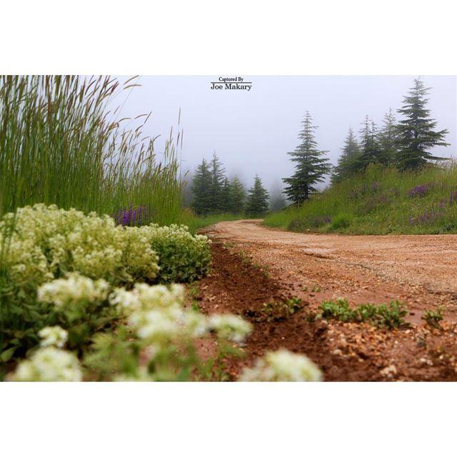 cedars cedarsofgod road fog forest beautifullebanon livelovelebanon...