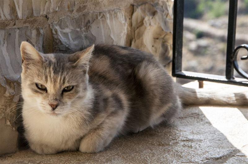A Cat Deir Hamatoura
