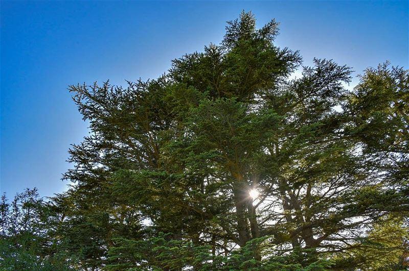 "Beauty is a Light in the Heart..""Gibran Khalil Gibran""-📍Tannourine... (Cedar Reserve Tannourine)"