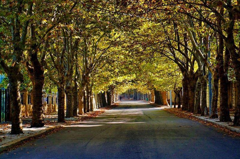 Sofar sofar mountlebanon montliban lebanesevillages trees ...