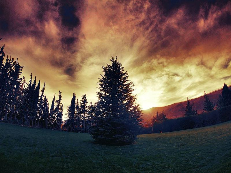 Setting the sky on fire 🔥 clouds cloudy trees Lebanon nature ... (Château Kefraya)