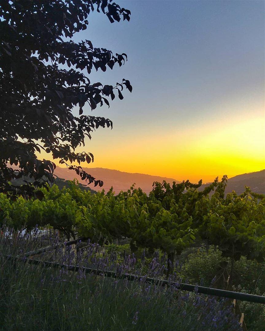 😍 lebanon nature naturelovers natureporn landscape follow4follow ... (Bmariam, Mont-Liban, Lebanon)