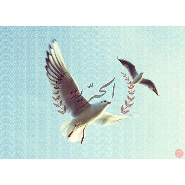 Freedom. art7ake