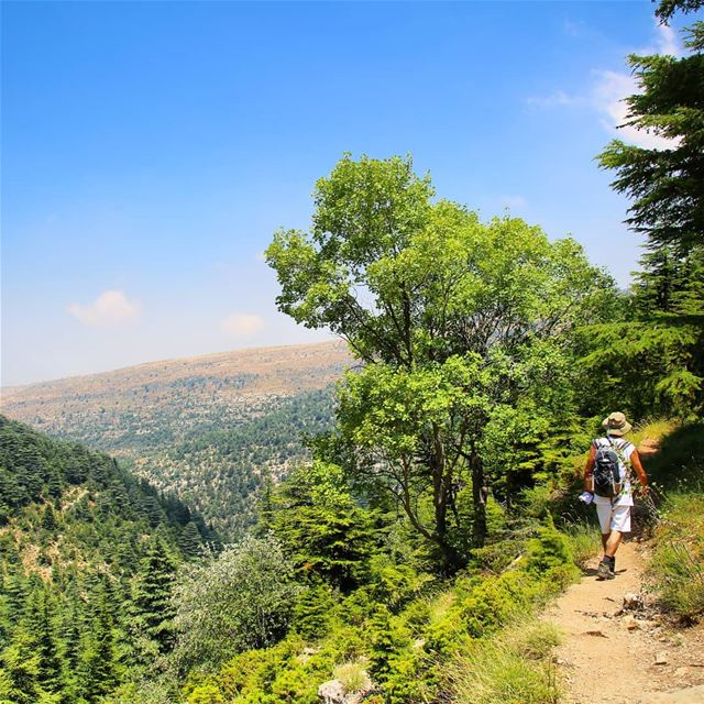 Explore I Hiking, Ehden Forest Reserve & Lebanon this Sunday. Booking.... (Horsh Ehden)