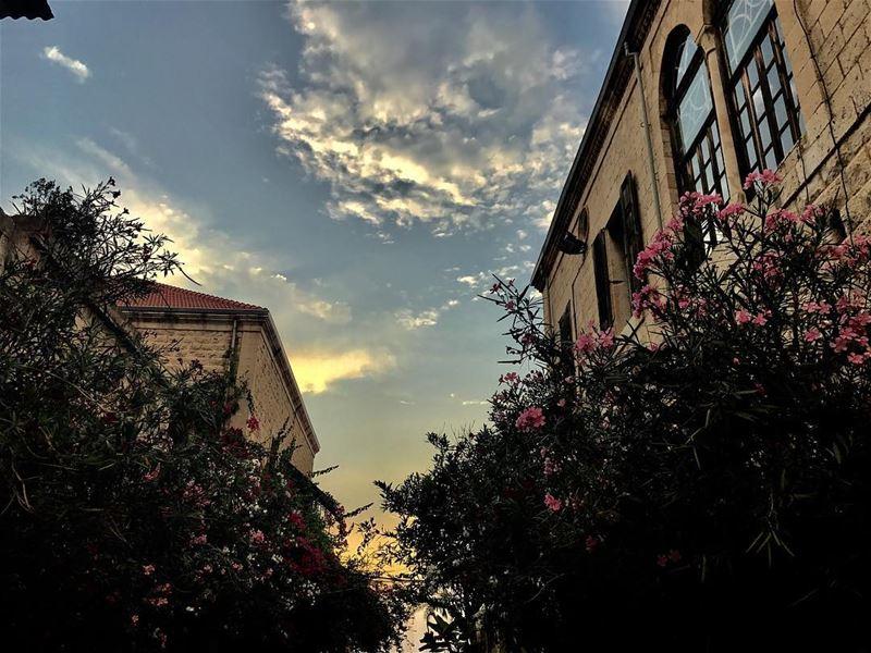 Flowerful morning 🌸☀️•••••••••••• morning ... (جونية - Jounieh)