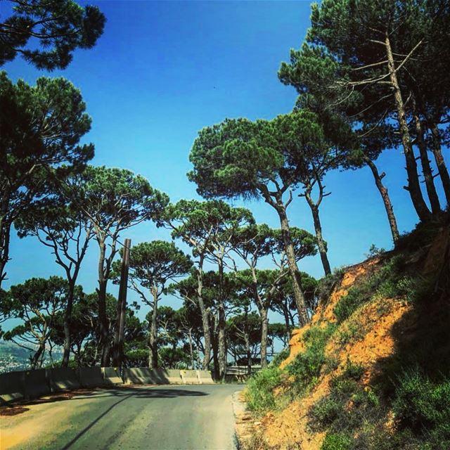 Suivre ses rêves...ils connaissent toujours le chemin.💚💙 photography ... (Lebanon)