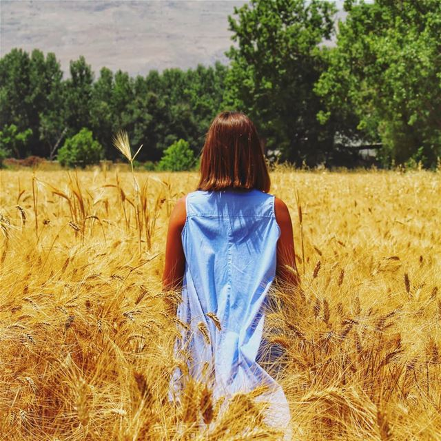 Part of the wheat 🌾 livelovebekaa ........ naturepainting ... (Taanayel- Bekaa)