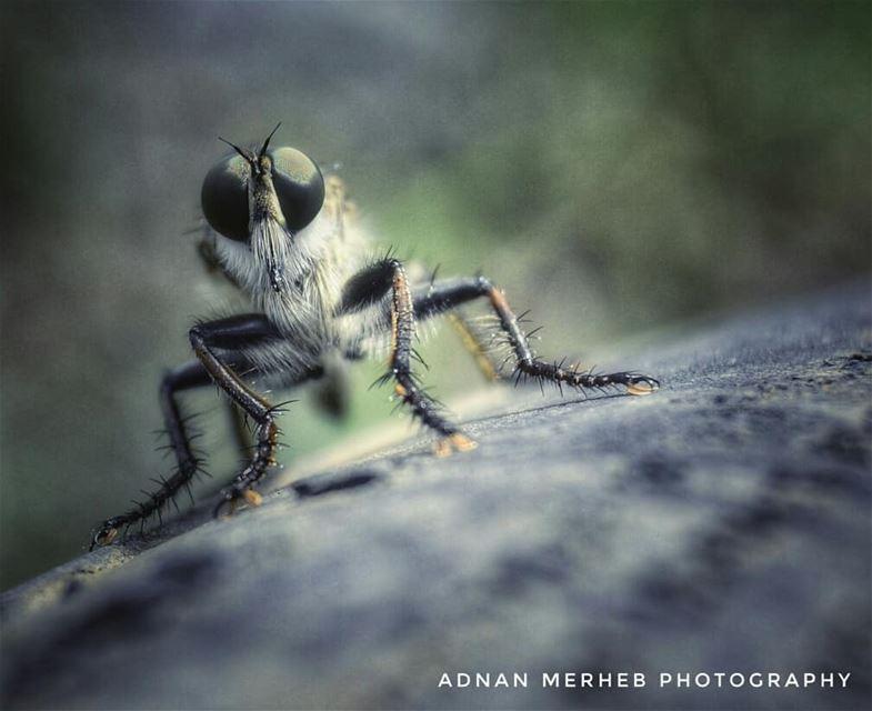 swip لأ و اخدت الوضعية للتصوير 😂 insects insect bug bugs envywear ...