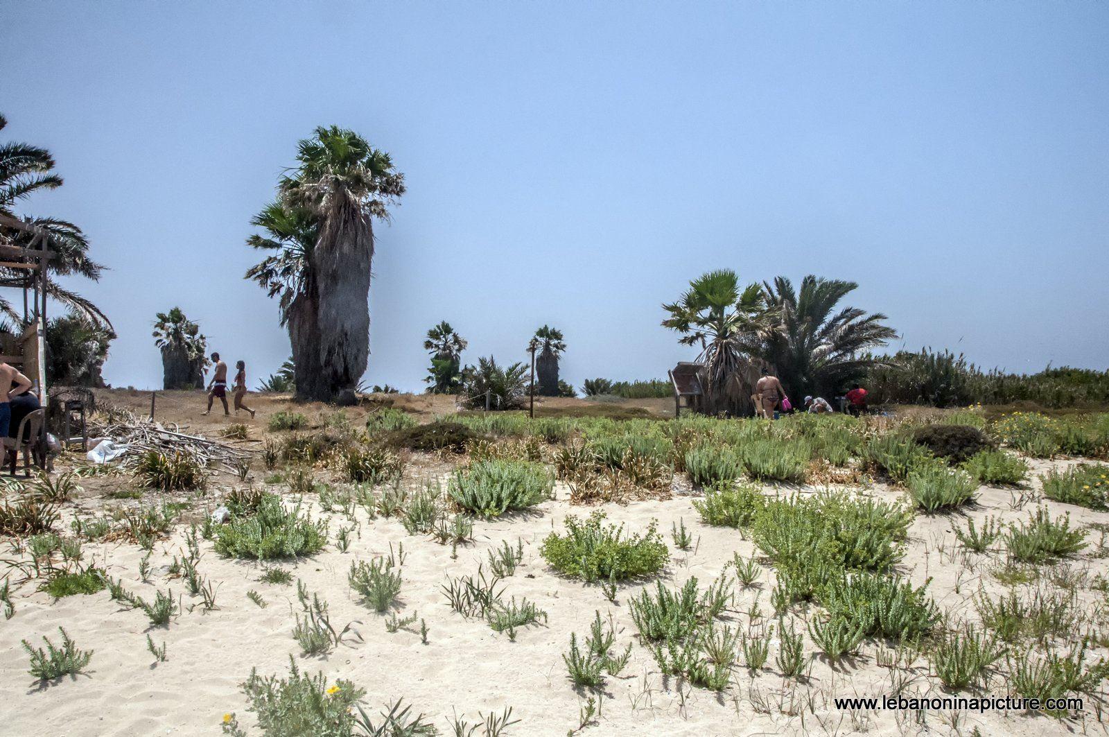 The Rabbit Island , North Lebanon جزيرة الارانب ، شمال لبنان (Palm Island)