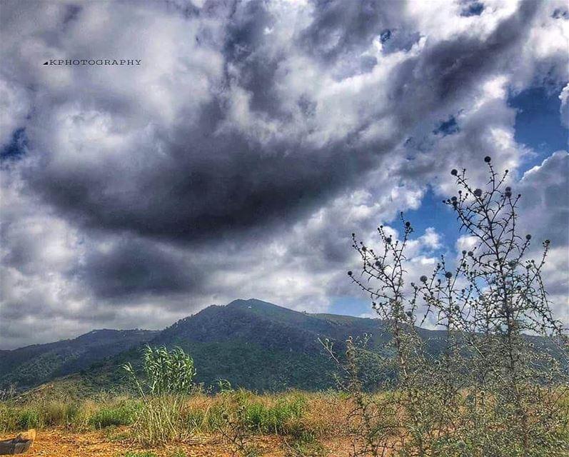 ستأتي الفراشاتُ عما قريب..و سيتألفُ ربيعٌ صغيرٌ في جسدينا ... 🦋🦋 *... (Lebanon)