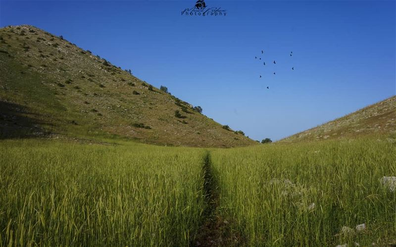 The beautiful road in the grass 🌾🍃 • • • chouf shoufreserve lebanon ... (Jbâa Ech Choûf, Béqaa, Lebanon)