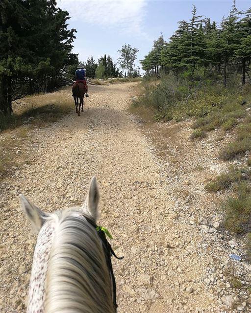 horseride rideinnature ainzhalta track lebanon hobby horse horses nature... (Aïn Zhalta, Mont-Liban, Lebanon)