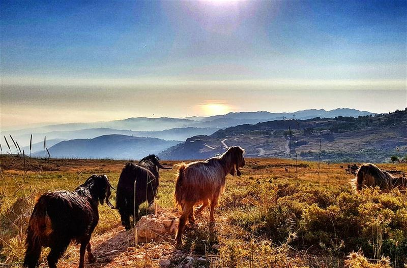 Even if we don't have the power to choose where we come from, we can still... (Qanat Bakish, Mont-Liban, Lebanon)
