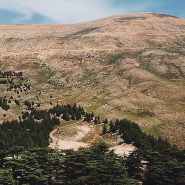 Citados no Bíblia dezenas de vezes, os Cedros do Líbano são considerados... (Bcharré, Liban-Nord, Lebanon)