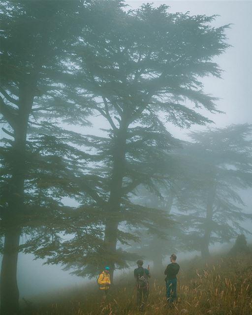 Spectacular Nature 🌲...... theglobewanderer green cedar mist red ... (Ehden, Lebanon)