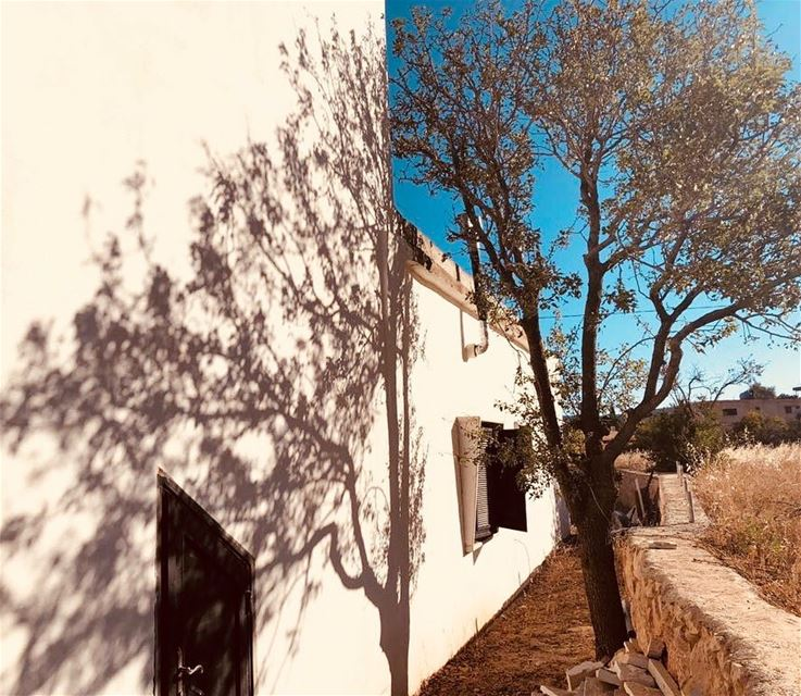 I am about as detailed as a shadow tree oldhouse shadowsandlight... (Valle de la Becá)