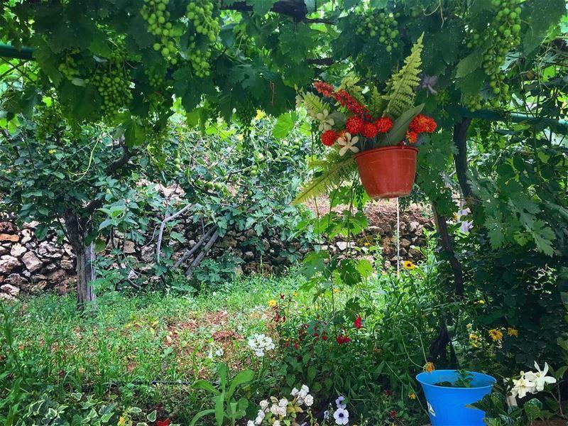 A step into paradise 🦄.... garden travelgirl discover explore ... (Faraya, Mont-Liban, Lebanon)
