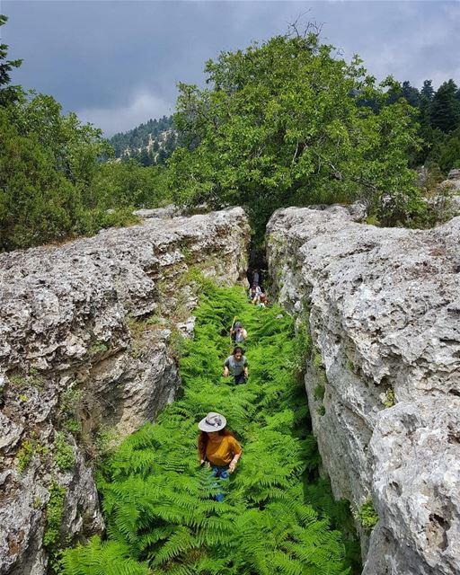 داخل الممرات الصخرية المميزة التي نحتتها المياه الموسمية داخل الصخور الكلسي
