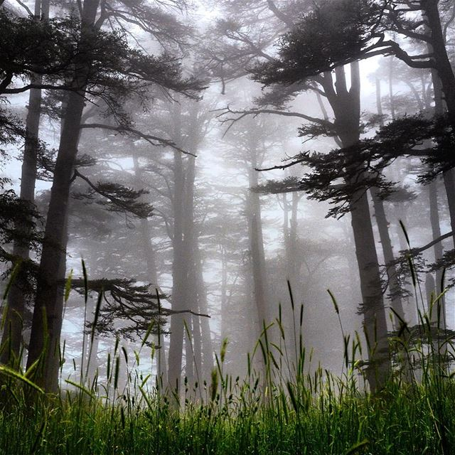 cedars of god forest under a breathtaking mystical phantasmagoric ...