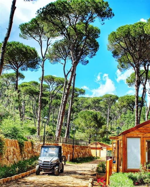 Can't wait to go back again to this  place 🏕 livelovejezzine ... (La Maison de la Forêt)
