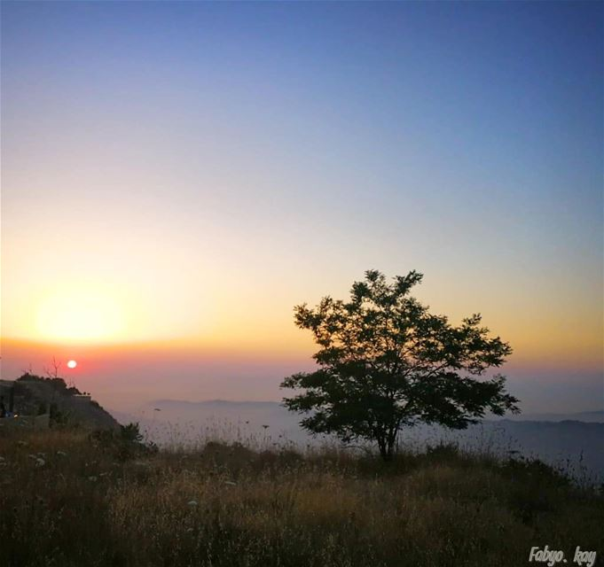 🔹 SAWFAR 🌳 🏜️🌅 🌲LEBANON 🔹 🔸Single tree in Sunset Light... 🔸... (Sawfar, Mont-Liban, Lebanon)