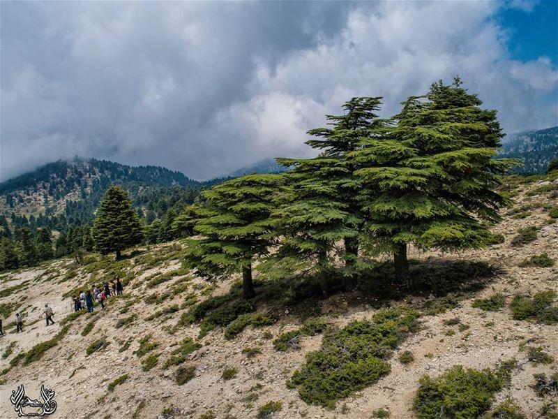 تحت الأرزات تمشيّنا ❤ Lebanon GoPro super_lebanon LebanonShots ...