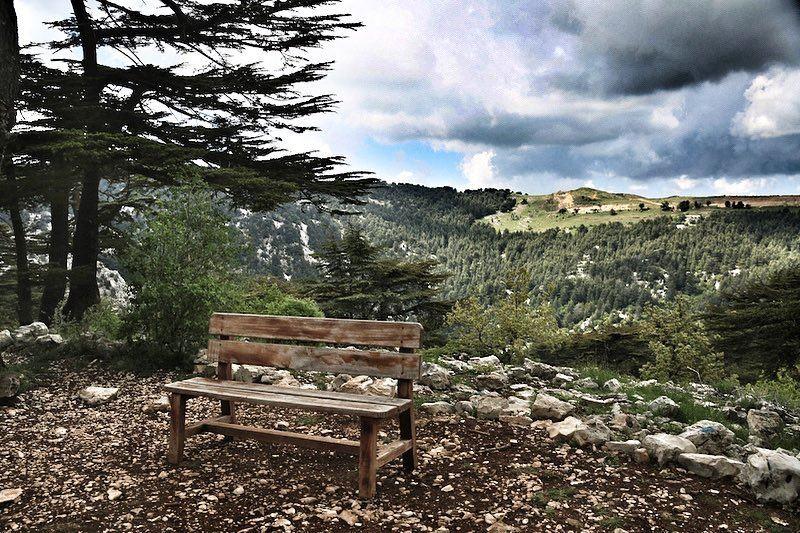 🌲The call of the forest🌲 a7labaladbil3alam 🇱🇧..... photo love ... (Arz Tannoûrîne)
