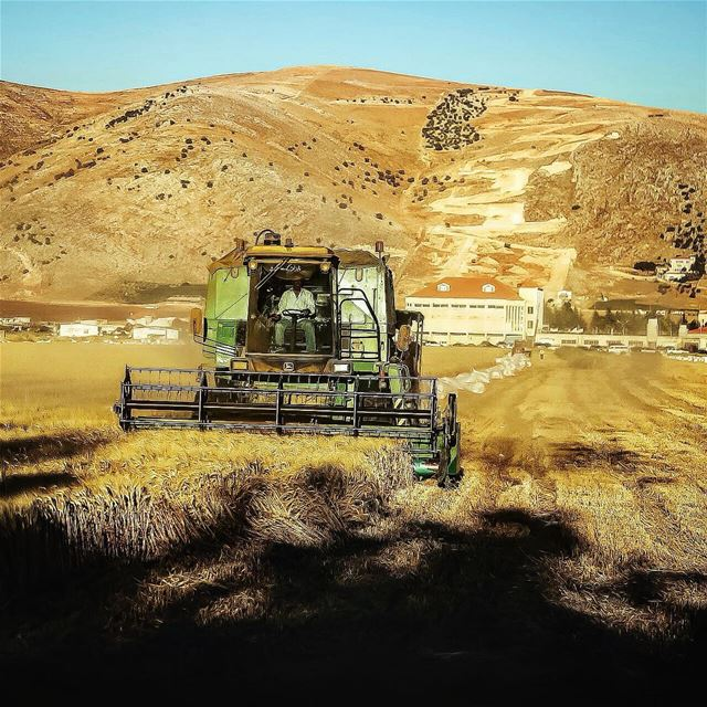 Around Lebanon . Lebanon wheat harvesting Bekaa ...