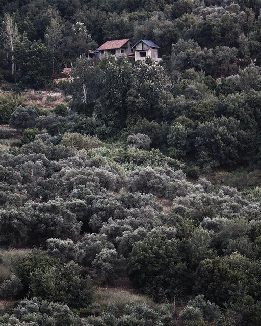 Living in the woods 🏡 (Deir Mîmess, Al Janub, Lebanon)
