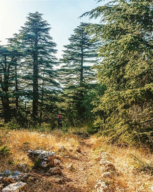 ____________________________________________________ treehugger961 ... (Aïn Zhalta, Mont-Liban, Lebanon)