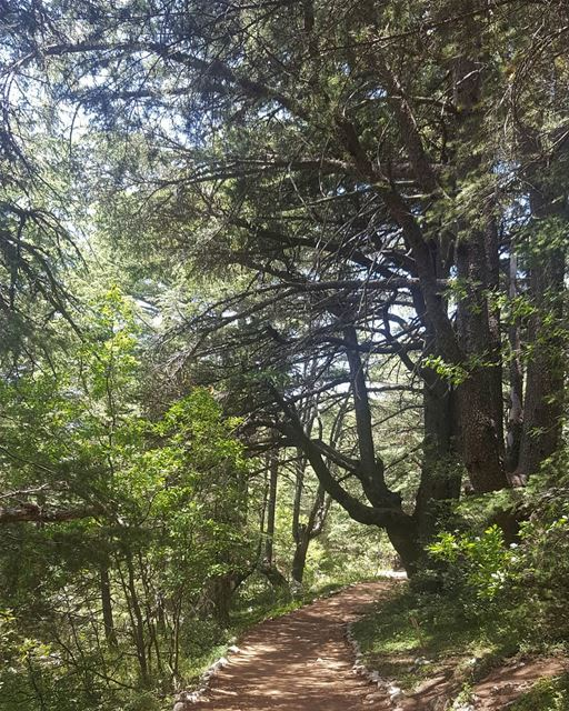 treescape trees adventure life lovelytime lovelyplace ... (Arz el Bâroûk)