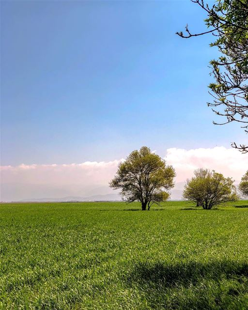 Chasing green!..... natgeoshot natgeotravelpic liveoutside ... (Lebanon)