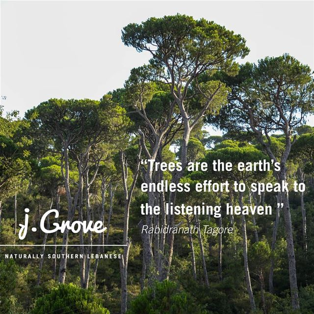 🌳🌳🌳 Quote jGrove Tree Trees Green Nature NatureLovers Healthy ...